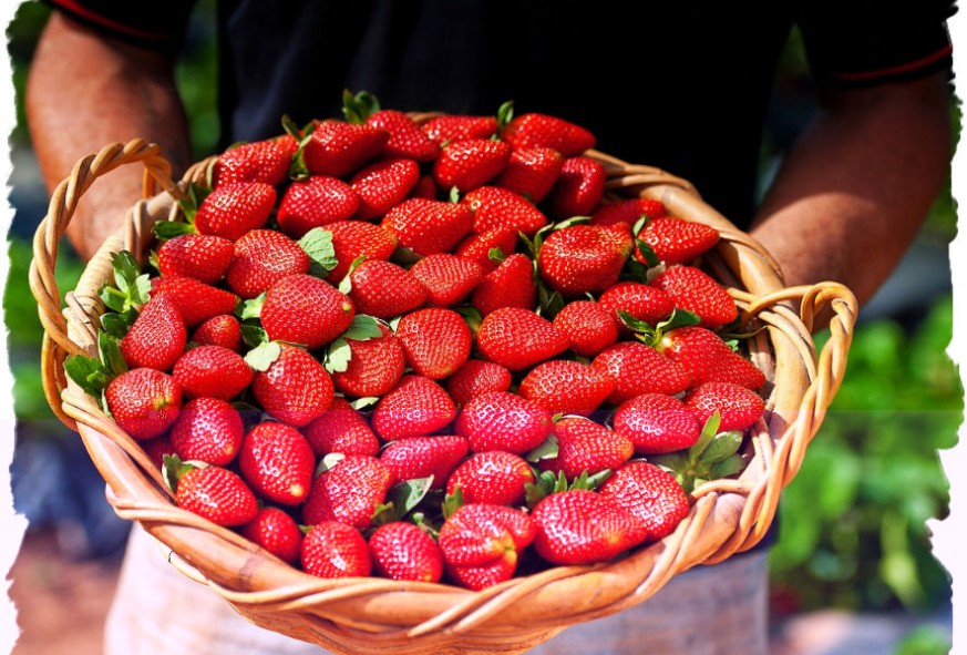Gallery - basket of sweet berries